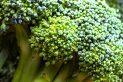 Broccoli for Osteoarthritis Treatment