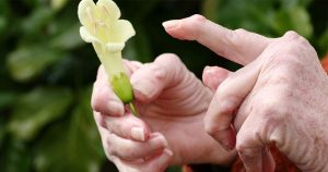 Older woman's hands holding a flower